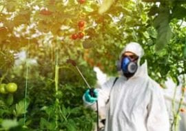 Person spraying pesticide